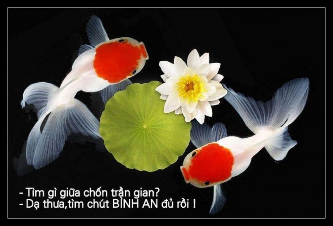 Queenie Phạm-Nguyễn