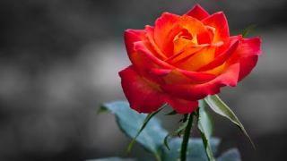 ♡ GIOVANNI MARRADI - Garden Of Dreams